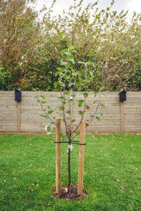 tree-stake-400x600